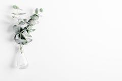 Η άνοιξη με το βοτανικό πρότυπο στην άσπρη τοπ άποψη υποβάθρου Στοκ Εικόνα