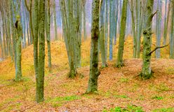 Η άνοιξη χρωμάτισε τους κορμούς δασικών δέντρων στοκ εικόνες με δικαίωμα ελεύθερης χρήσης