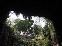 Η άποψη από το κατώτατο σημείο ενός Cenote στοκ φωτογραφία με δικαίωμα ελεύθερης χρήσης