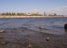 Η άποψη δύο παπιών κολυμπά στη θάλασσα στο υπόβαθρο παραλιών στοκ εικόνα με δικαίωμα ελεύθερης χρήσης