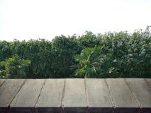 Η άποψη προοπτικής της κενής συγκεκριμένης επιφάνειας μπροστά από το δέντρο ολοκληρώνει το υπόβαθρο Στοκ φωτογραφία με δικαίωμα ελεύθερης χρήσης