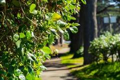 Η άποψη στο χρυσό πάρκο πυλών στοκ φωτογραφία