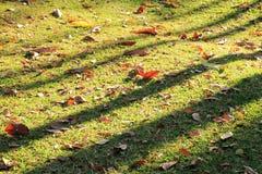 Η άποψη σχετικά με μια χλόη με τα φύλλα φθινοπώρου και τις σκιές των δέντρων μια ηλιόλουστη ημέρα Στοκ Φωτογραφία