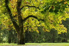 Η άποψη σχετικά με το πάρκο με τα μεγάλα δέντρα στην ηλιόλουστη ημέρα στοκ φωτογραφία με δικαίωμα ελεύθερης χρήσης