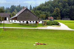 Η άποψη σχετικά με το πράσινο λιβάδι με τις αγελάδες, με τα σπίτια, μια λίμνη και τα βουνά στο υπόβαθρο Στοκ Εικόνες