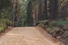 Η άποψη της πορείας πεζοπορίας τουριστών δασικών δρόμων, τίτλος βαθύτερος στα ξύλα την ηλιόλουστη θερινή ημέρα, θόλωσε εν μέρει τ στοκ εικόνες με δικαίωμα ελεύθερης χρήσης