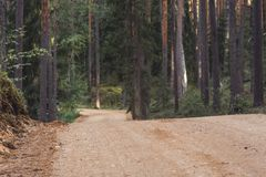 Η άποψη της πορείας πεζοπορίας τουριστών δασικών δρόμων, τίτλος βαθύτερος στα ξύλα την ηλιόλουστη θερινή ημέρα, θόλωσε εν μέρει τ στοκ εικόνα με δικαίωμα ελεύθερης χρήσης