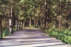 Η άποψη του δασικού δρόμου, τίτλος βαθύτερος στα ξύλα την ηλιόλουστη θερινή ημέρα, θόλωσε εν μέρει την εικόνα με ελεύθερου χώρου  στοκ εικόνες με δικαίωμα ελεύθερης χρήσης