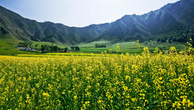 Η άποψη Menyuan, Qinghai 4 Στοκ εικόνα με δικαίωμα ελεύθερης χρήσης