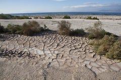Η λάσπη ραγίζει κοντά στη θάλασσα Salton Στοκ Εικόνα
