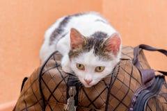 Η άσπρη γάτα είναι σε μια βαλίτσα Αναμονή το τραίνο στο σταθμό τρένου Επιβάτης με μια βαλίτσα ενώ traveling_ στοκ εικόνα