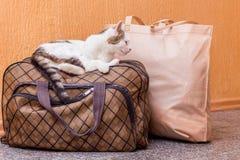 Η άσπρη γάτα είναι σε μια βαλίτσα Αναμονή το τραίνο στο σταθμό τρένου Επιβάτης με μια βαλίτσα ενώ traveling_ στοκ φωτογραφία