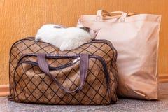 Η άσπρη γάτα είναι σε μια βαλίτσα Αναμονή το τραίνο στο σταθμό τρένου Επιβάτης με μια βαλίτσα ενώ traveling_ στοκ εικόνες με δικαίωμα ελεύθερης χρήσης