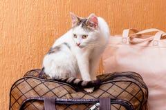 Η άσπρη γάτα είναι σε μια βαλίτσα Αναμονή το τραίνο στο σταθμό τρένου Επιβάτης με μια βαλίτσα ενώ traveling_ στοκ φωτογραφίες