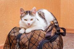 Η άσπρη γάτα είναι σε μια βαλίτσα Αναμονή το τραίνο στο σταθμό τρένου Επιβάτης με μια βαλίτσα ενώ traveling_ στοκ φωτογραφία με δικαίωμα ελεύθερης χρήσης