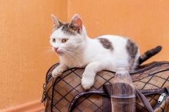 Η άσπρη γάτα κάθεται σε μια βαλίτσα Αναμονή το τραίνο στο σταθμό τρένου Επιβάτης με μια βαλίτσα ενώ traveling_ στοκ φωτογραφία με δικαίωμα ελεύθερης χρήσης