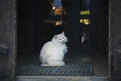 Η άσπρη γάτα κάθεται στο κατώφλι στοκ φωτογραφία με δικαίωμα ελεύθερης χρήσης