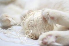 Η άσπρη γάτα παίζεται με μια σφαίρα του νήματος clouseup Στοκ Εικόνα