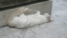 Η άσπρη γάτα που παίρνει σαράντα κλείνει το μάτι ΞΑΦΝΙΚΟΣ ΞΥΠΝΉΣΤΕ απόθεμα βίντεο