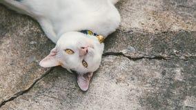 Η άσπρη και μαύρη γάτα χαλαρώνει υπαίθρια Στοκ εικόνες με δικαίωμα ελεύθερης χρήσης