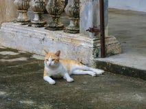 Η άσπρη και πορτοκαλιά γάτα χρώματος χαλαρώνει στο παλαιό πάτωμα τσιμέντου Στοκ Εικόνες