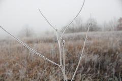 Η άσπρη πρώτη αναπνοή παγετού του χειμώνα, μετέτρεψε τον τομέα σε λευκό Στοκ Φωτογραφίες