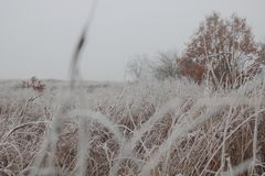 Η άσπρη πρώτη αναπνοή παγετού του χειμώνα, μετέτρεψε τον τομέα σε λευκό Στοκ Εικόνες