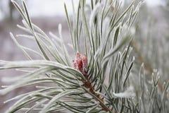 Η άσπρη πρώτη αναπνοή παγετού του χειμώνα, μετέτρεψε το δέντρο σε λευκό Στοκ φωτογραφίες με δικαίωμα ελεύθερης χρήσης