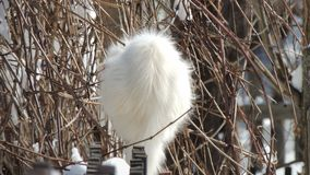 Η άσπρη χνουδωτή γάτα κάθεται το χειμώνα στο φράκτη Στοκ εικόνα με δικαίωμα ελεύθερης χρήσης