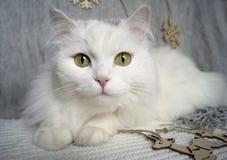 Η άσπρη όμορφη γάτα με τα πράσινα μάτια βρίσκεται σε ένα γκρίζο μαντίλι στο υπόβαθρο των διακοσμήσεων χριστουγεννιάτικων δέντρων  στοκ φωτογραφία με δικαίωμα ελεύθερης χρήσης