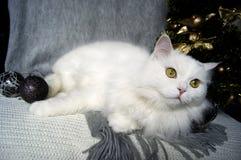 Η άσπρη όμορφη γάτα με τα πράσινα μάτια βρίσκεται σε ένα γκρίζο μαντίλι στο υπόβαθρο των διακοσμήσεων χριστουγεννιάτικων δέντρων  στοκ εικόνες