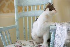 Η άσπρος-καφετιά γάτα κάθεται σε μια ξύλινη εκλεκτής ποιότητας καρέκλα στοκ εικόνες