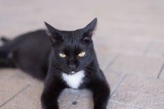 Η άστεγη γάτα περιπλανιέται γύρω από την οδό Είναι επίσης έγκυος και λιμοκτονώντας Στοκ Εικόνες