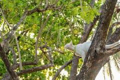 Η άτακτη άσπρη γάτα κοιτάζει επίμονα σε κάτι στοκ φωτογραφία
