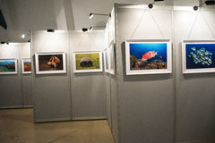 Η έκθεση φωτογραφιών, η αίθουσα έκθεσης Στοκ Φωτογραφίες