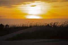 Ηλέκτρινο ηλιοβασίλεμα με τους μεταδιδόμενους μέσω του ανέμου καλάμους στον αμμόλοφο Στοκ εικόνες με δικαίωμα ελεύθερης χρήσης