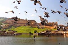 Ηλέκτρινο οχυρό με τα περιστέρια στο Jaipur Στοκ Φωτογραφία