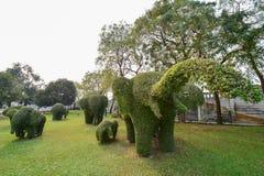 Η έκδοση 3 δέντρων ελεφάντων Στοκ Εικόνες