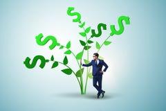 Η έννοια δέντρων χρημάτων με τον επιχειρηματία στην ανάπτυξη των κερδών στοκ φωτογραφίες