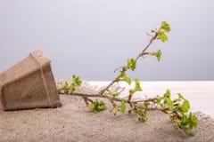 Η έννοια της κηπουρικής χόμπι Στοκ εικόνες με δικαίωμα ελεύθερης χρήσης