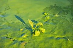 Η έννοια της ρύπανσης των υδάτων περιβαλλοντική με τον ποταμό καλύπτεται γ Στοκ Φωτογραφίες