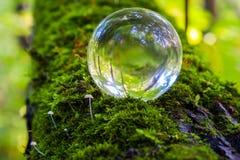 Η έννοια της φύσης, πράσινο δάσος Στοκ φωτογραφία με δικαίωμα ελεύθερης χρήσης
