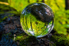 Η έννοια της φύσης, πράσινο δάσος Στοκ φωτογραφίες με δικαίωμα ελεύθερης χρήσης