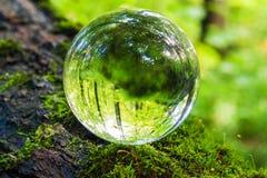 Η έννοια της φύσης, πράσινο δάσος Στοκ εικόνα με δικαίωμα ελεύθερης χρήσης