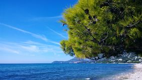 Η έννοια των διακοπών Wellness στην ακτή: η γούνινη κορώνα των κώνων πεύκων και τυρκουάζ έκταση της θάλασσας στοκ φωτογραφία με δικαίωμα ελεύθερης χρήσης