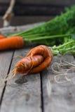 Η έννοια των υγιών καρότων κατανάλωσης Στοκ Εικόνα