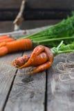 Η έννοια των υγιών καρότων κατανάλωσης Στοκ εικόνες με δικαίωμα ελεύθερης χρήσης