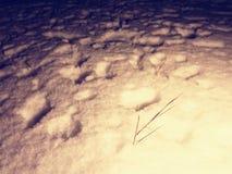 Η έρευνα του προσώπου εξαφανίστηκε στο χειμερινό τοπίο βαθύ ανθρώπινο χιόνι ιχνών Στοκ Εικόνες