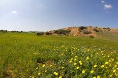 η έρημος ανθίζει την άνοιξη χ Στοκ Εικόνα