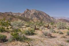 Η έρημος ανθίζει την άνοιξη Στοκ Εικόνα